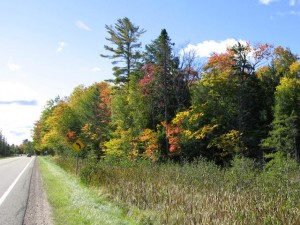 Fall color along Minnesota highway