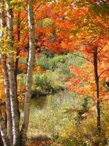 Fall Color Marquette, MI