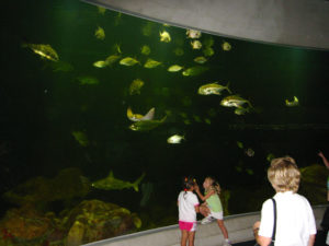 Gulf of Mexico Aquarium Tank