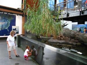 Mississippi National River Museum and Aquarium
