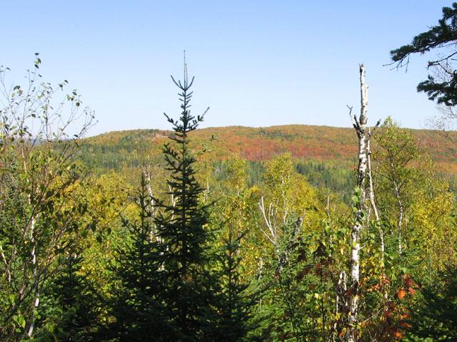Fall Color picture at top of Carlton Peak