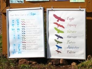Fall migration count, Hawk's Ridge