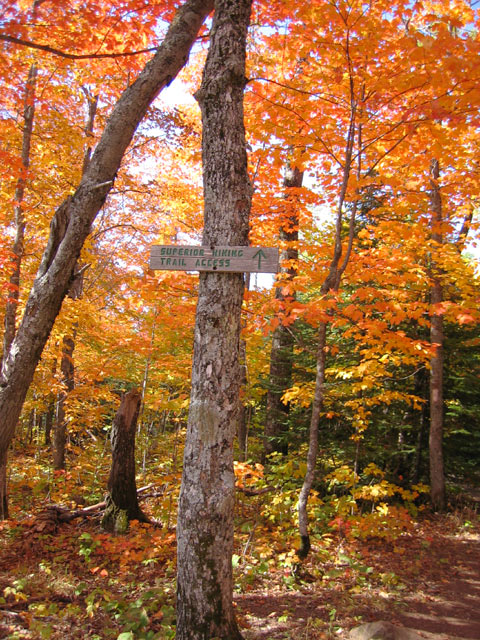 Fall Color Picture along the Superior Hiking Trail