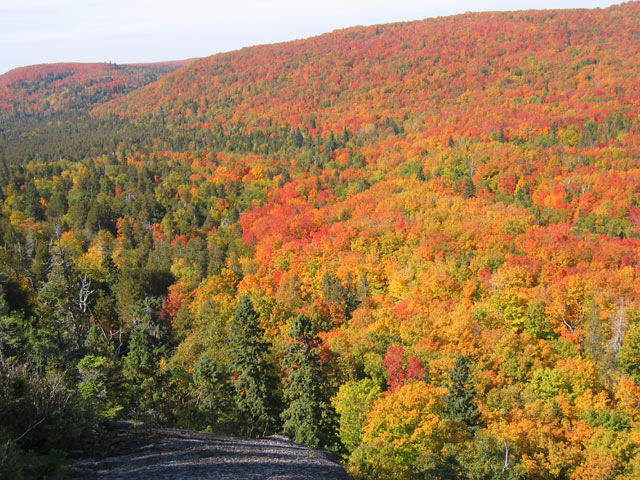 Fall Color Picture Moose Mountain Lutsen, MN