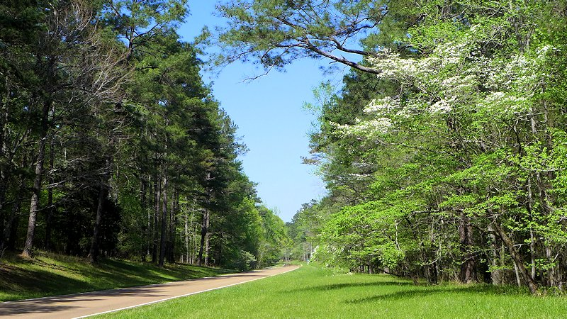 Dogwoods along the Natchez Trace Parkway