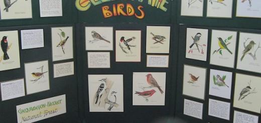 bird-fest4631