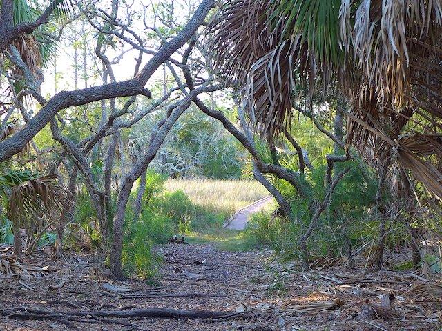 dennis creek trail